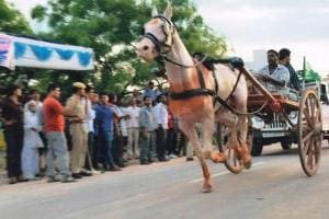 Demand to resume 'tonga race' gains momentum in Rajasthan