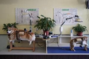 In Pics: Chinese pet owners turn to acupuncture to treat cats and dogs