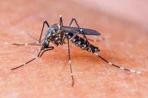 Coolers and underground water tanks have become the most common mosquito breeding grounds in Manimajra and adjoining villages of Kishangarh, Khudda Ali Sher and Maloya.