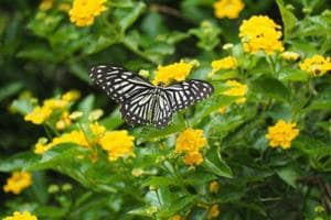 A month-long initiative with the aim of conserving butterflies is being organised in the Capital.