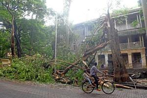 A tree fell in Matunga on Wednesday.