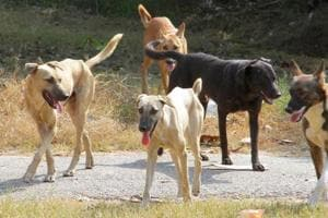 Dogs can be seen roaming in the OPD corridor and other places on the hospital campus.