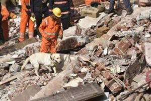 Sniffer dogs at the site of the collapse on Thursday.