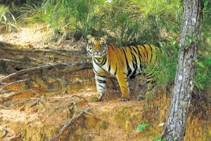 Green ministry likely to approve mining projects in Kanha-Pench tiger...