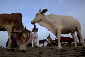 Cattle trade is usually unregulated with farmers relying on local middlemen to sell or buy animals at local cattle fairs.