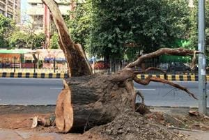 Delhiwale: The thriving tree society of KG Marg