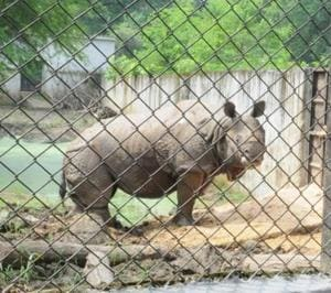 Patna zoo becomes 'leader' in rhino births, gets new captive breeding...