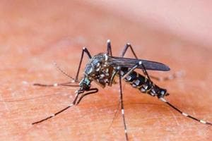 Senior civic official dies of dengue days after being admitted to...