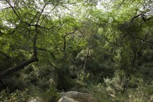 Delhi's green lung Aravallis facing desertification, Ridge cover down...