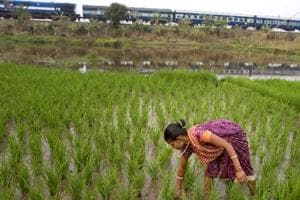 Govt estimates show kharif foodgrain output to drop from last year's...