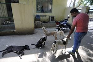 Animals at Noida shelter suffer amid NGO, authority tiff