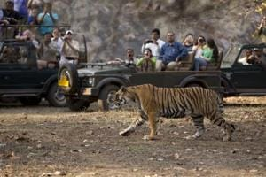 Planning a vacation in Diwali? Head to Ranthambore or Kaziranga on a...