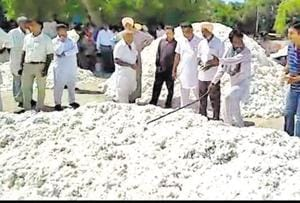 Cotton is piling up at grain markets in Mansa.