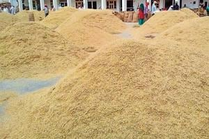 Many rice exporters are of the opinion that the prices have gone up due to tax exemption on paddy and rice after the implementation of the Goods and Service Tax.
