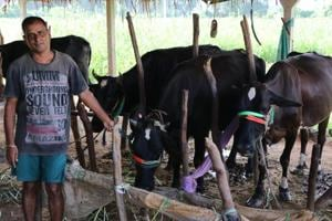 Rajendra Patel, 50, the sole breadwinner in his family, got two cows from his father-in-law after the factory where he worked shut down. In 18 months, his cattle count went up to seven, with earnings now at Rs 25,000 a month.