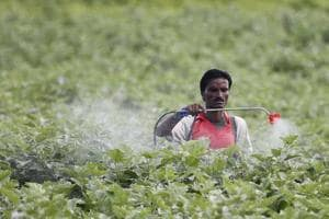 A farmer sprays pesticide in the cotton field at Pandharkawada in Maharashtra.