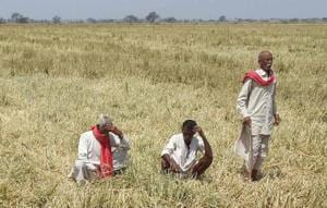 The Yogi government's crop loan waiver scheme is expected to cause a financial burden of about Rs 36000 crore (including the NPAs) on the state exchequer.