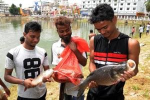 Locals catching fish after fishes started floating in Line tank pond,  Ranchi