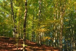 Is stress wrecking your health? Study says living close to a forest...