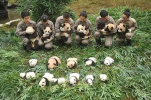 In Pics: These baby pandas making their debut will brighten your day