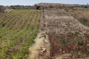 How poor farmers in Lebanon went from growing weed to cultivating...