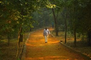 'Haunted' in folklore, south Delhi's Sanjay Van is now a birders'...
