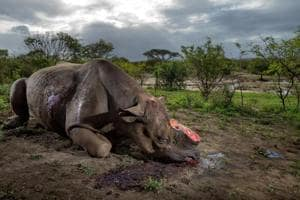 Photographer Brent Stirton's image of a bullet-ridden rhino, with its horn cut off, speaks of the horrors of poaching.