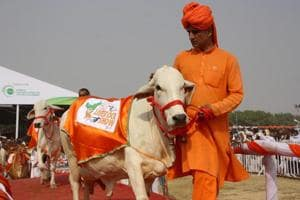 Tharparkar cow Dhawal from Nalwi Khurad , Karnal participates in ramp show during state-level cattle fair in Jhajjar on Saturday.