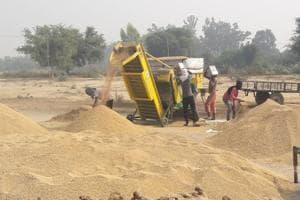 Labourers at work at the mandi in Makha Chehlan village in Mansa district.