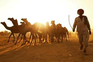 Photos: 8 day Pushkar camel fair underway in Rajasthan