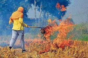 The ban on practice of burning paddy straw has had little effect.