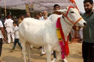 Cow protection has been the central theme of CM Vijay Rupani's public speeches after the BJP's landslide victory in Uttar Pradesh elections.