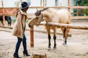 Blinkers off: Study says horses can read human body language