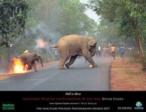 Hell is here: Powerful photo captures elephant, calf escaping flaming...