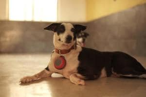 NGOAnimals Matter To Me has created a yoyo-sized woofer that can hang from a dog's collar and play soothing tunes to calm it during a storm or festival. The music is a mix of flute, water and pan pipe sounds.