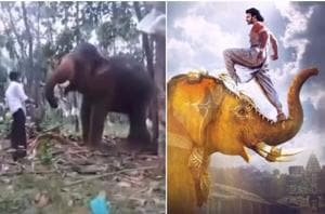 Baahubali fan tries to imitate Prabhas's elephant stunt, gets flung in...