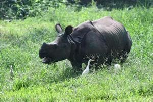 Kaziranga is home to more than 91% of Assam's rhinos, and over 80% of India's total count. A 2015 population census showed 2,401 rhinos inhabiting the park.