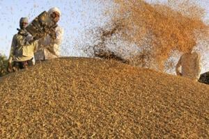Govt nod to paddy buying by commission agents, farmers feel cheated
