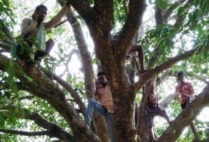 In remote Bihar tribal villages, trees keep people connected to the...
