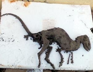 Dinosaur-like animal's fossil found in Uttarakhand
