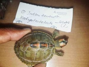 BJP leader's son held with exotic turtle in Uttarakhand, officials...