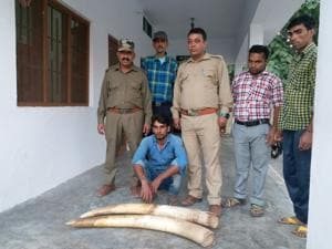 Three suspended in Terai elephant poaching incident