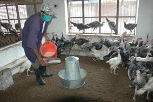 CARI mulls mobile phone app for poultry farmers