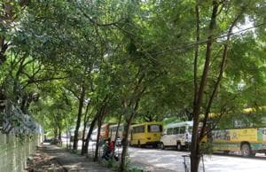 Felling of 1,961 trees in Dwarka comes under NGT scanner