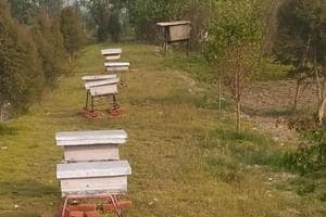 Keeping in mind the bone chilling winter that North India experiences, the experts at the Pant University have developed a technology that would help maintain suitable temperature in the beehive boxes round the year.