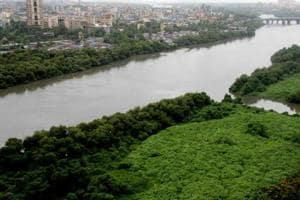 All Maha govt bodies to file reports on every mangrove destruction...
