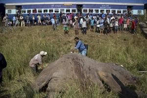 A passenger train passes as vets measure the carcass of two elephants that were hit and killed by a passenger train near a railway track in Thakur Kuchi village on the outskirts of Guwahati on November 19.