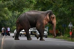 Elephant tramples man to death who tried taking its photograph in...