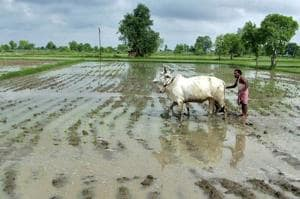Protecting rivers that enable farmers to feed us must be India's...