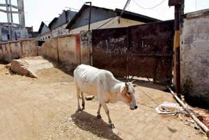 Govt likely to amend notification banning sale of cattle for slaughter